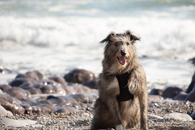 Pet Portraits Cardiff